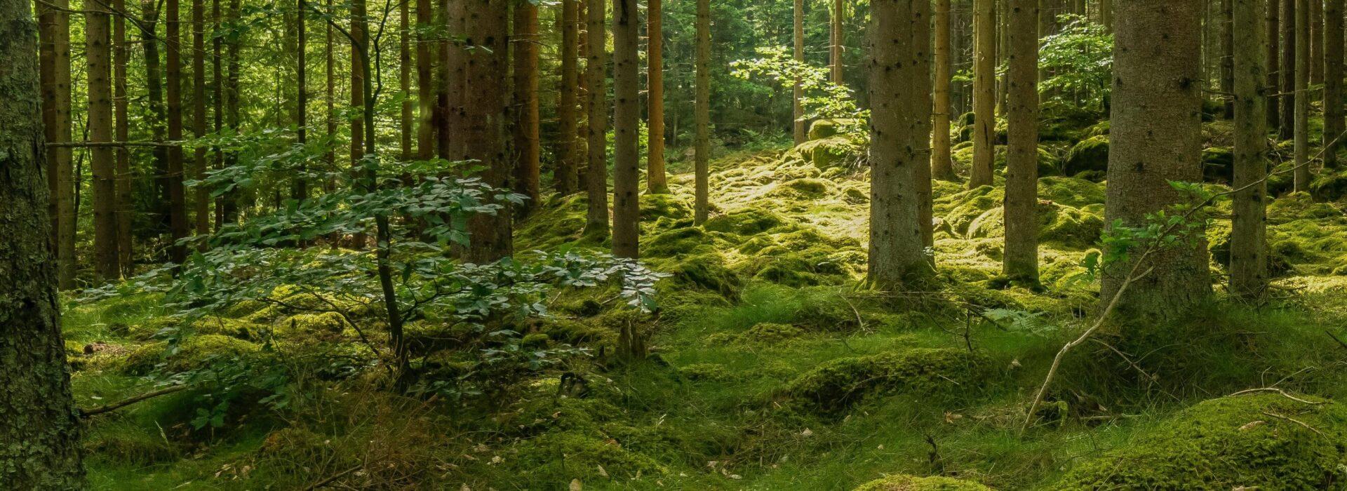 Technikum Leśnew Białowieży