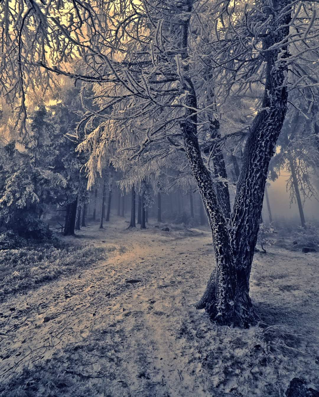 """Wyróżnienie, kategoria wiekowa do 15 lat, podkategoria przyrodnicze zdjęcie krajobrazowe - Maja Sobuta """"Zimą też jest pięknie"""""""