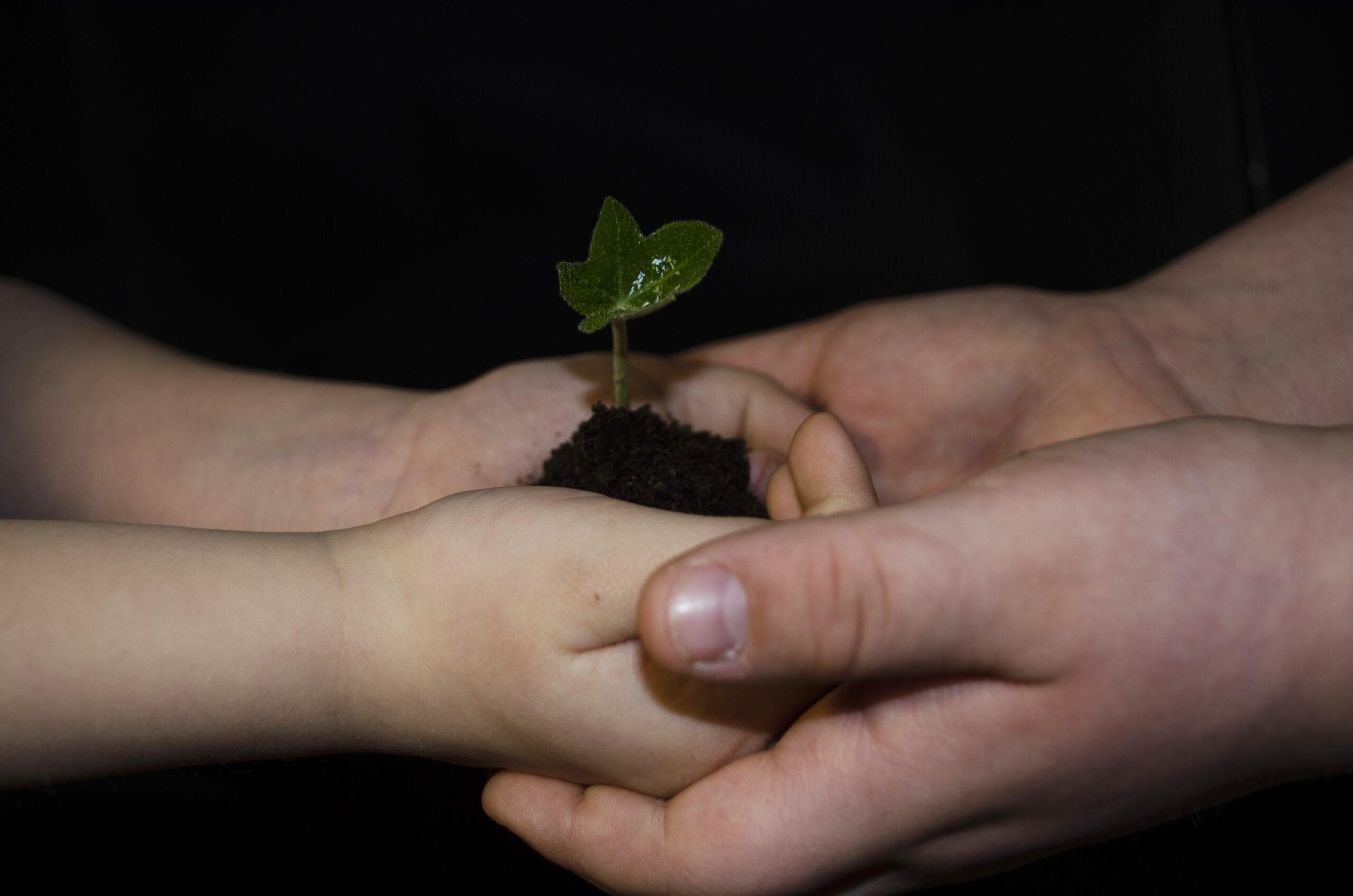 """III miejsce, kategoria wiekowa 16-20 lat, podkategoria leśne szczegóły – Julia Giergiela """"Przekazywanie miłości do natury z pokolenia na pokolenie"""""""