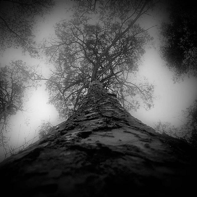 """II miejsce, kategoria wiekowa do 15 lat, podkategoria leśne szczegóły - Jakub Deleżuk """"Przyroda w parkach nr 3"""""""
