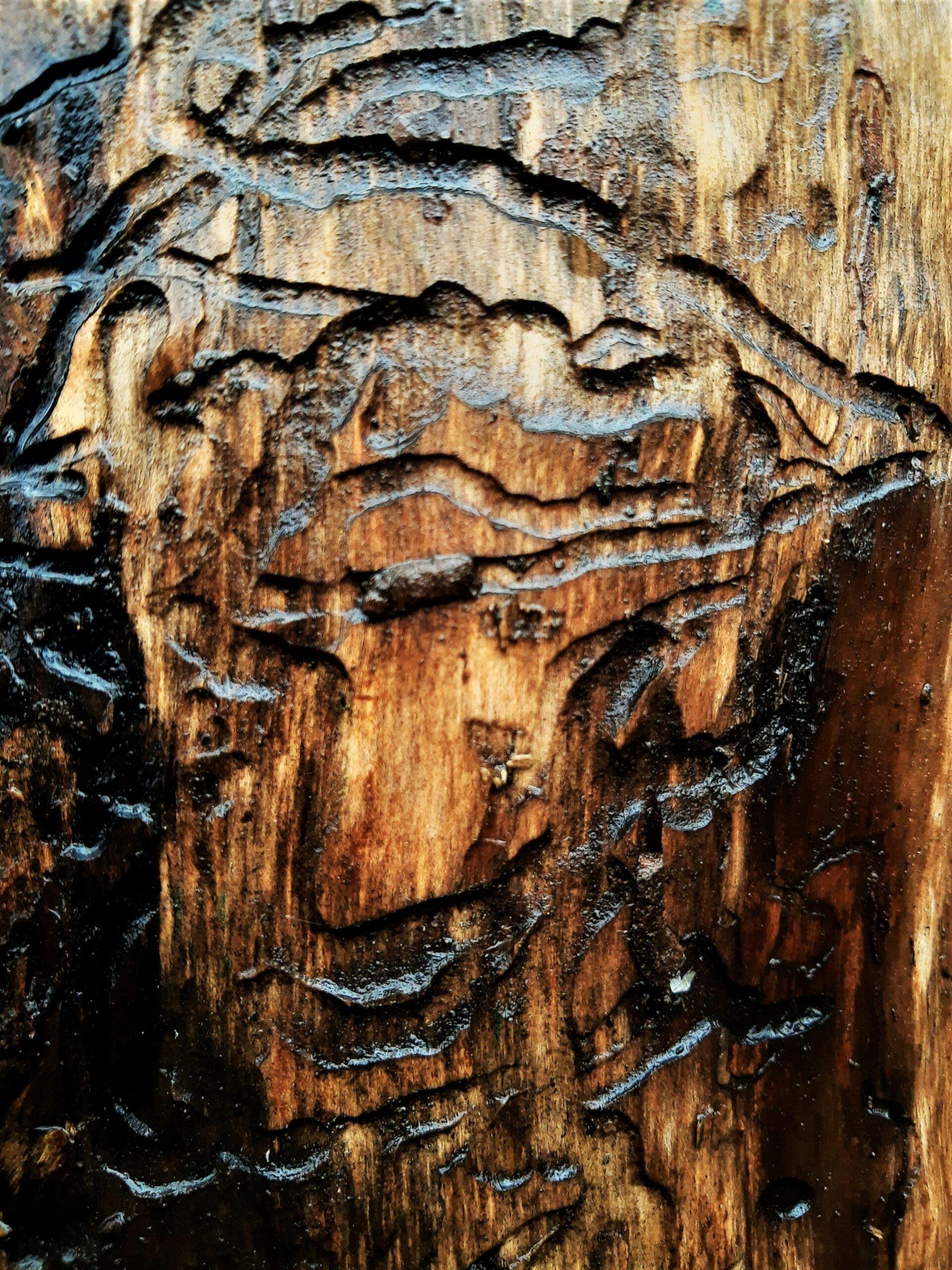 """Wyróżnienie, kategoria wiekowa 16-20 lat, podkategoria leśne szczegóły - Aleksandra Zielińska """"Mikro artyści"""""""