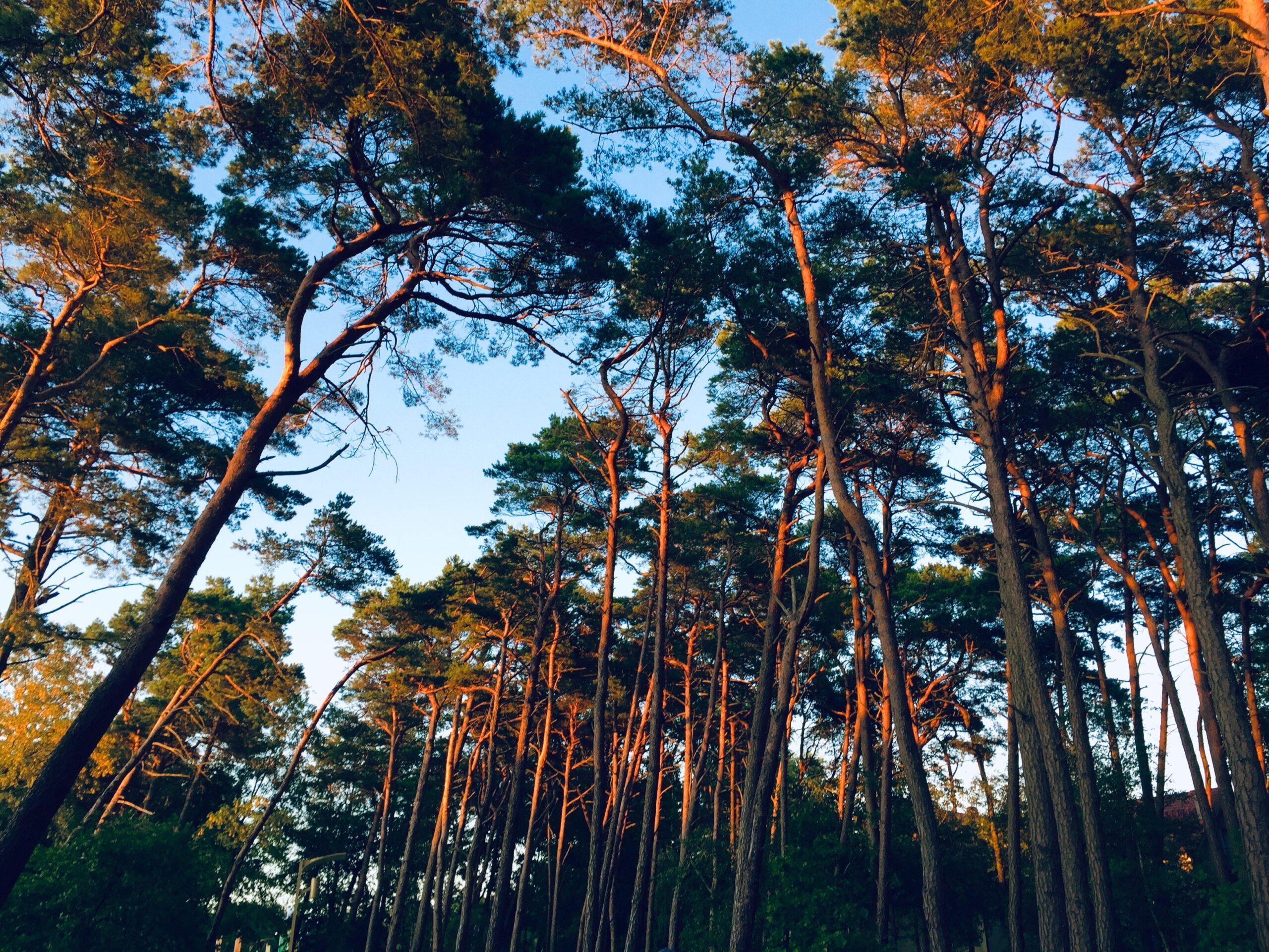 """Wyróżnienie, kategoria wiekowa 16-20 lat, podkategoria przyrodnicze zdjęcie krajobrazowe - Wiktoria Góźdź """"Płuca Ziemi"""""""