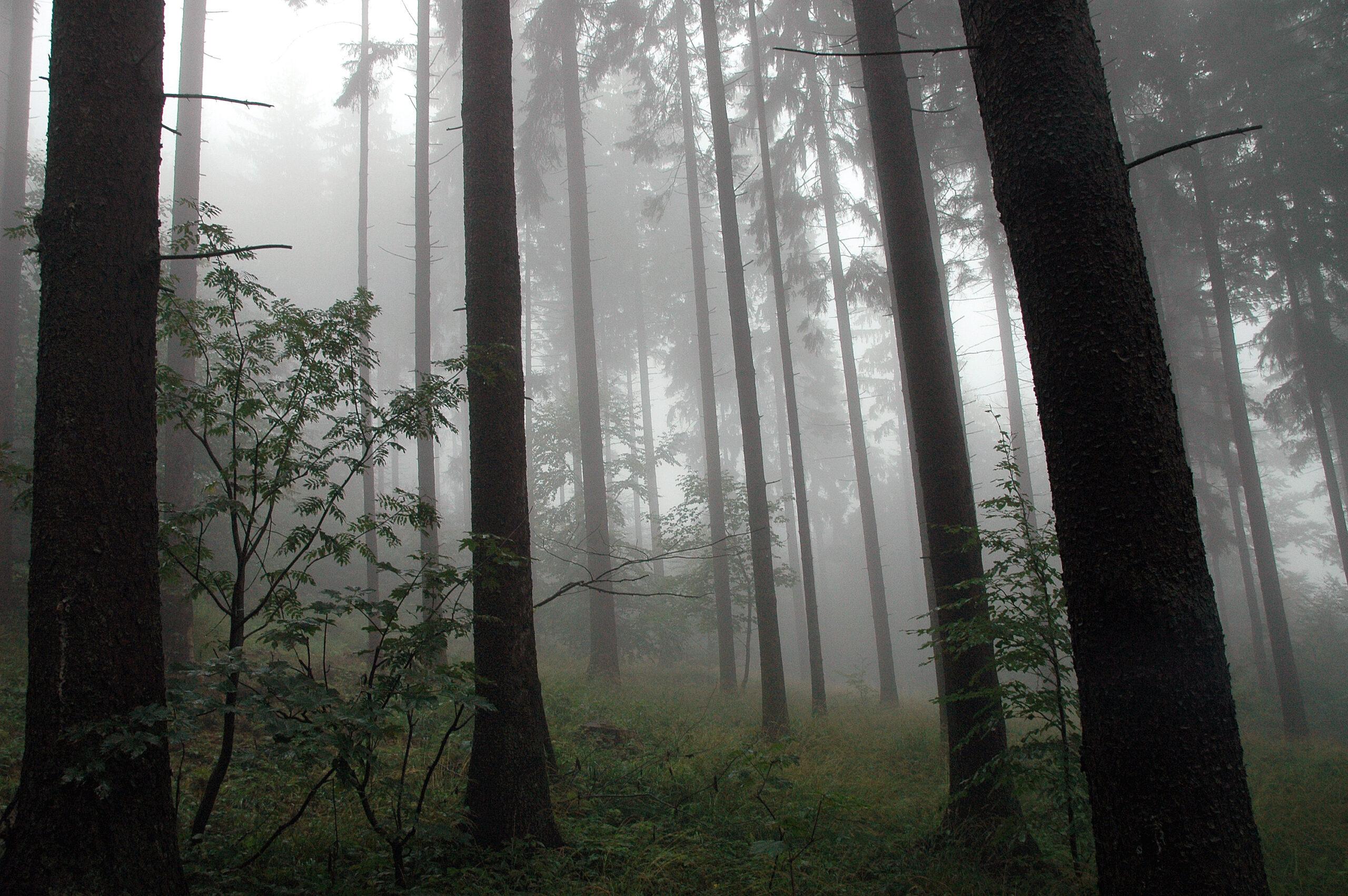 """Wyróżnienie, kategoria wiekowa 16-20 lat, podkategoria przyrodnicze zdjęcie krajobrazowe - Kacper Krzemiński """"Tajemnice lasu"""""""