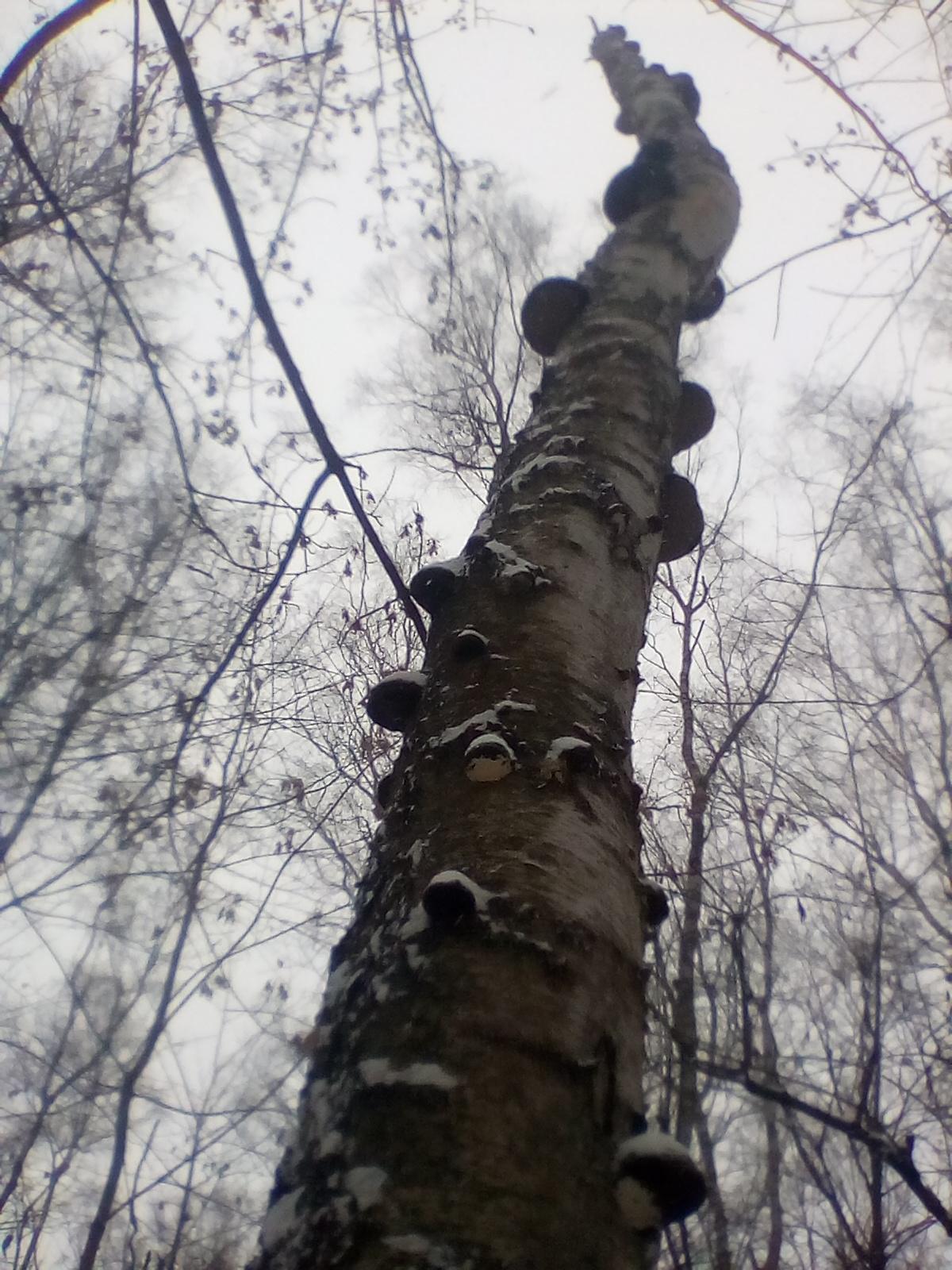 """Wyróżnienie, kategoria wiekowa powyżej 20 lat, podkategoria leśne szczegóły - Marta Jastrzębowska """"Huba i drzewo"""""""