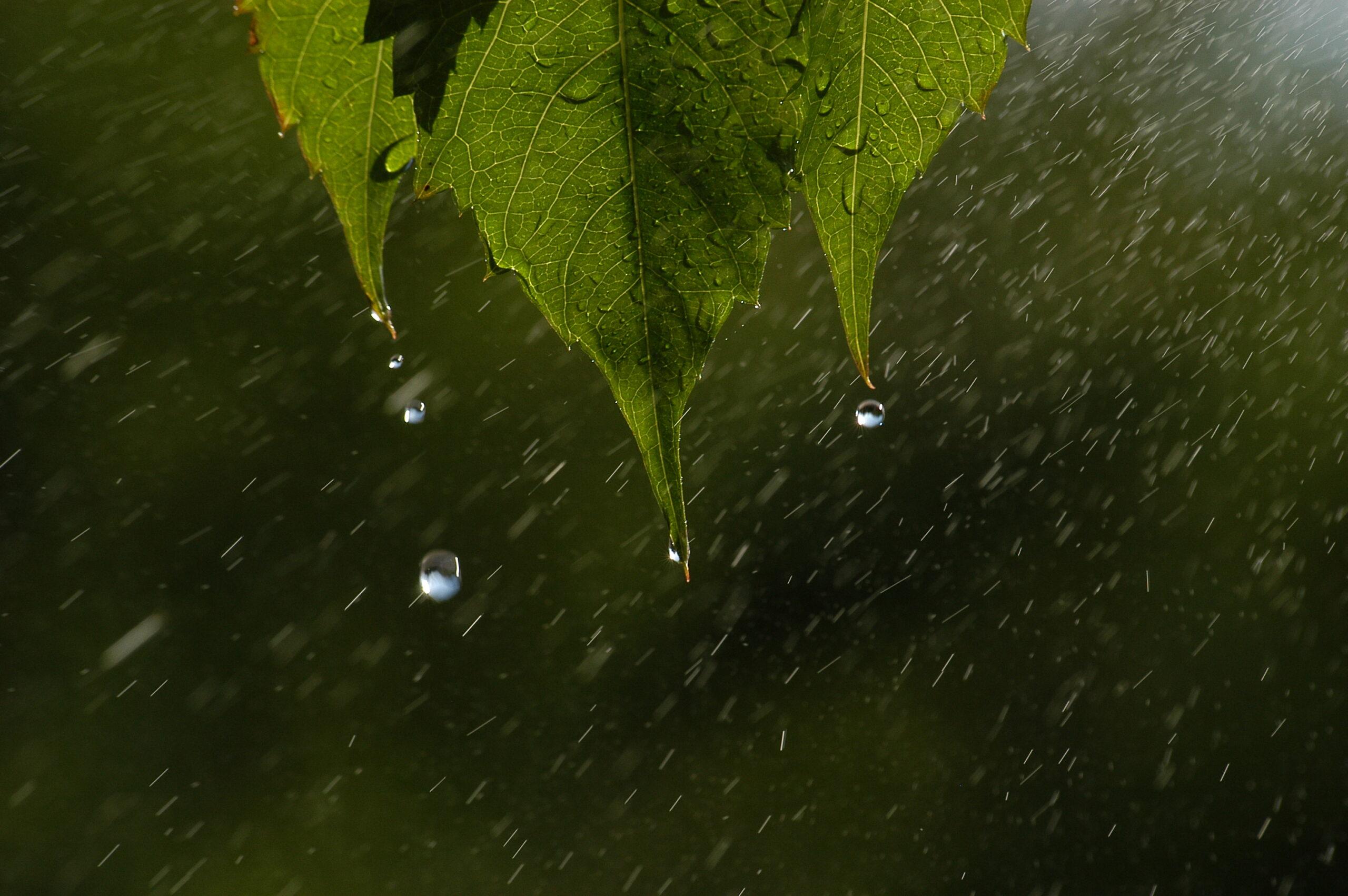 """Wyróżnienie, kategoria wiekowa powyżej 20 lat, podkategoria leśne szczegóły - Korneliusz Konsek """"Wiosenne łzy"""""""