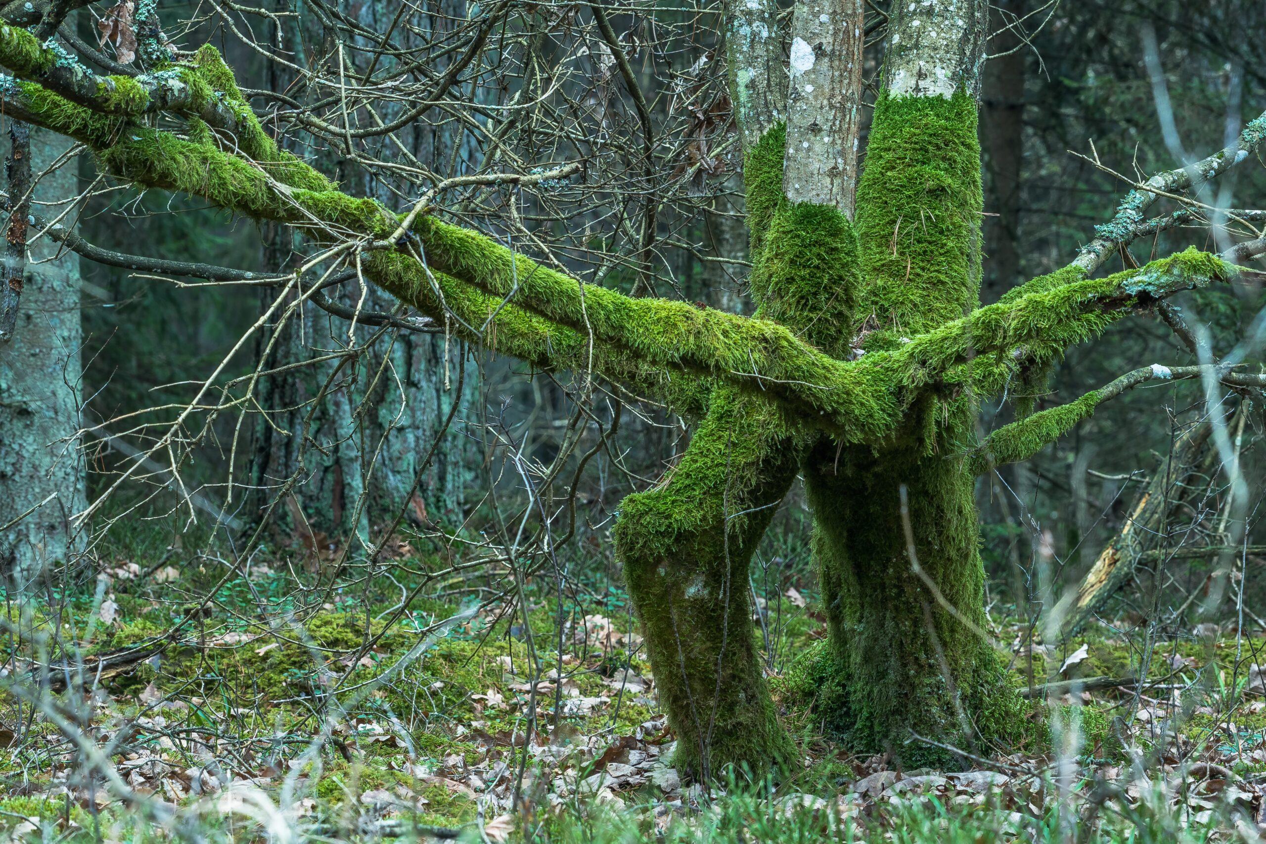 """Wyróżnienie, kategoria wiekowa powyżej 20 lat, podkategoria leśne szczegóły - Radosław Oreluk """"Drzewa"""""""