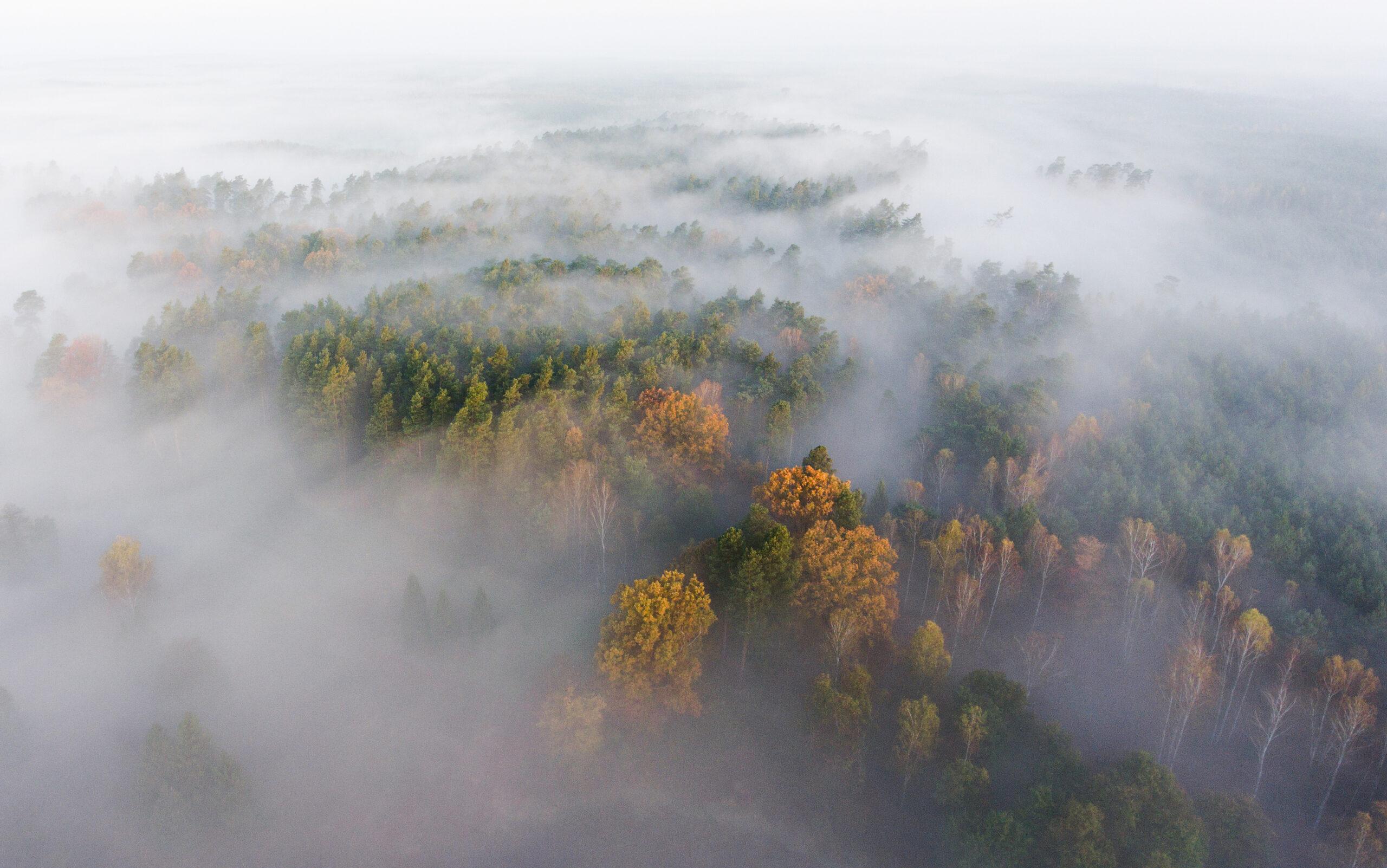 """III miejsce, kategoria wiekowa powyżej 20 lat, podkategoria przyrodnicze zdjęcie krajobrazowe – Tomasz Sczansny """"Skąpane we mgle"""""""