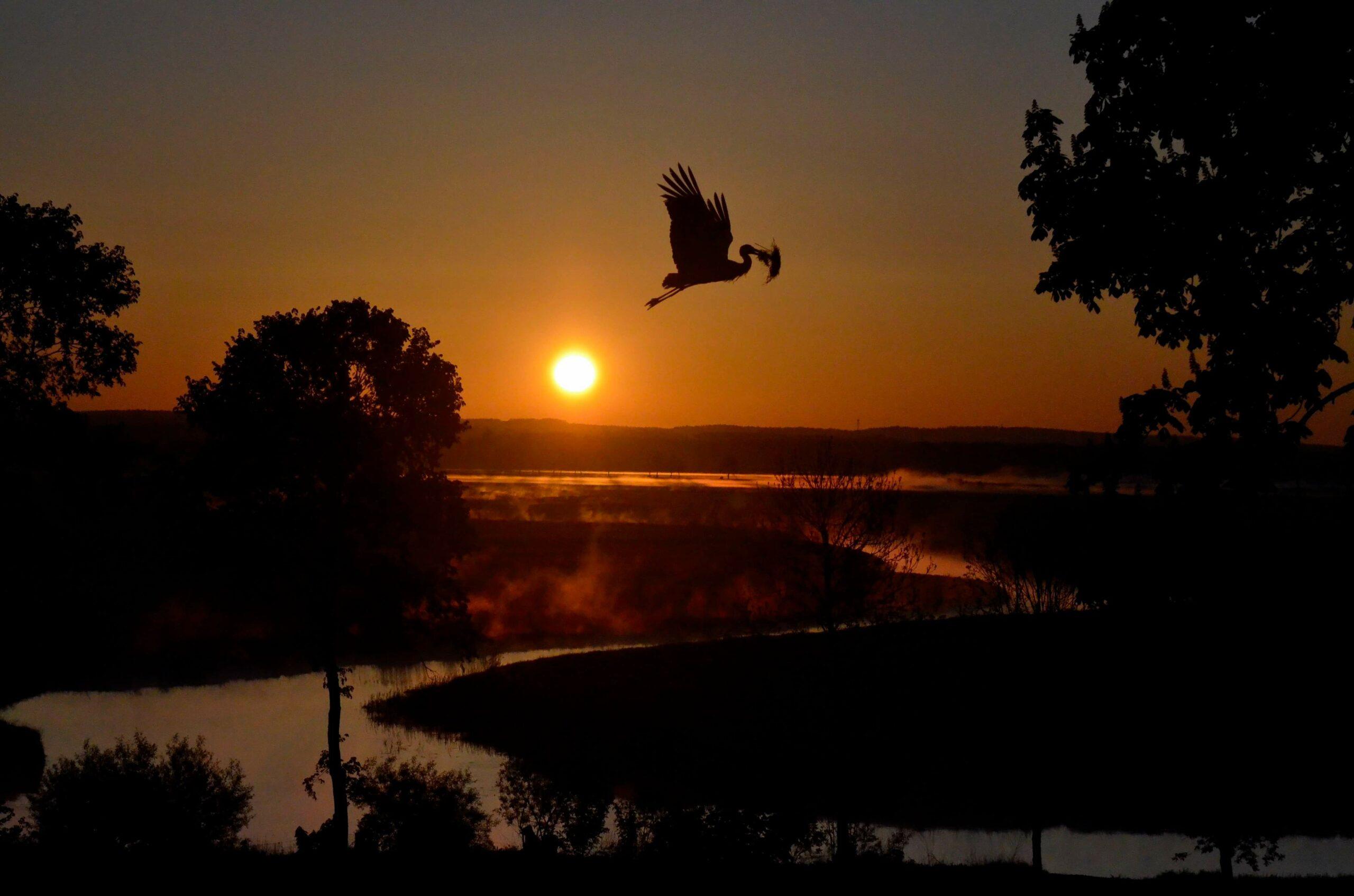 """Wyróżnienie, kategoria wiekowa powyżej 20 lat, podkategoria przyrodnicze zdjęcie krajobrazowe - Karolina Ostrowska """"Pracowity poranek"""""""
