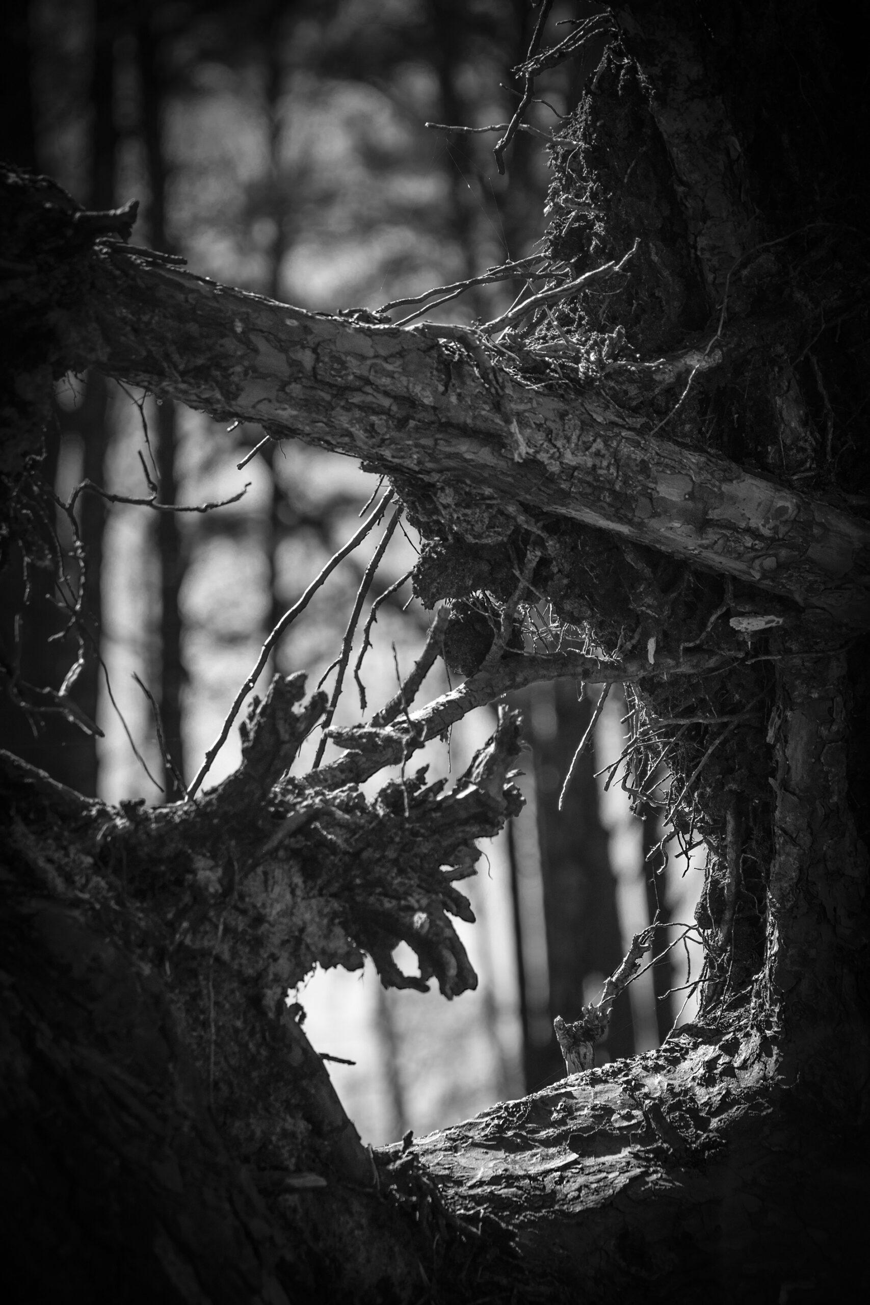 """Wyróżnienie Romana Rogozińskiego, kategoria wiekowa 16-20 lat, podkategoria leśne szczegóły - Amelia Januszewska """"Leśne narządy2"""""""
