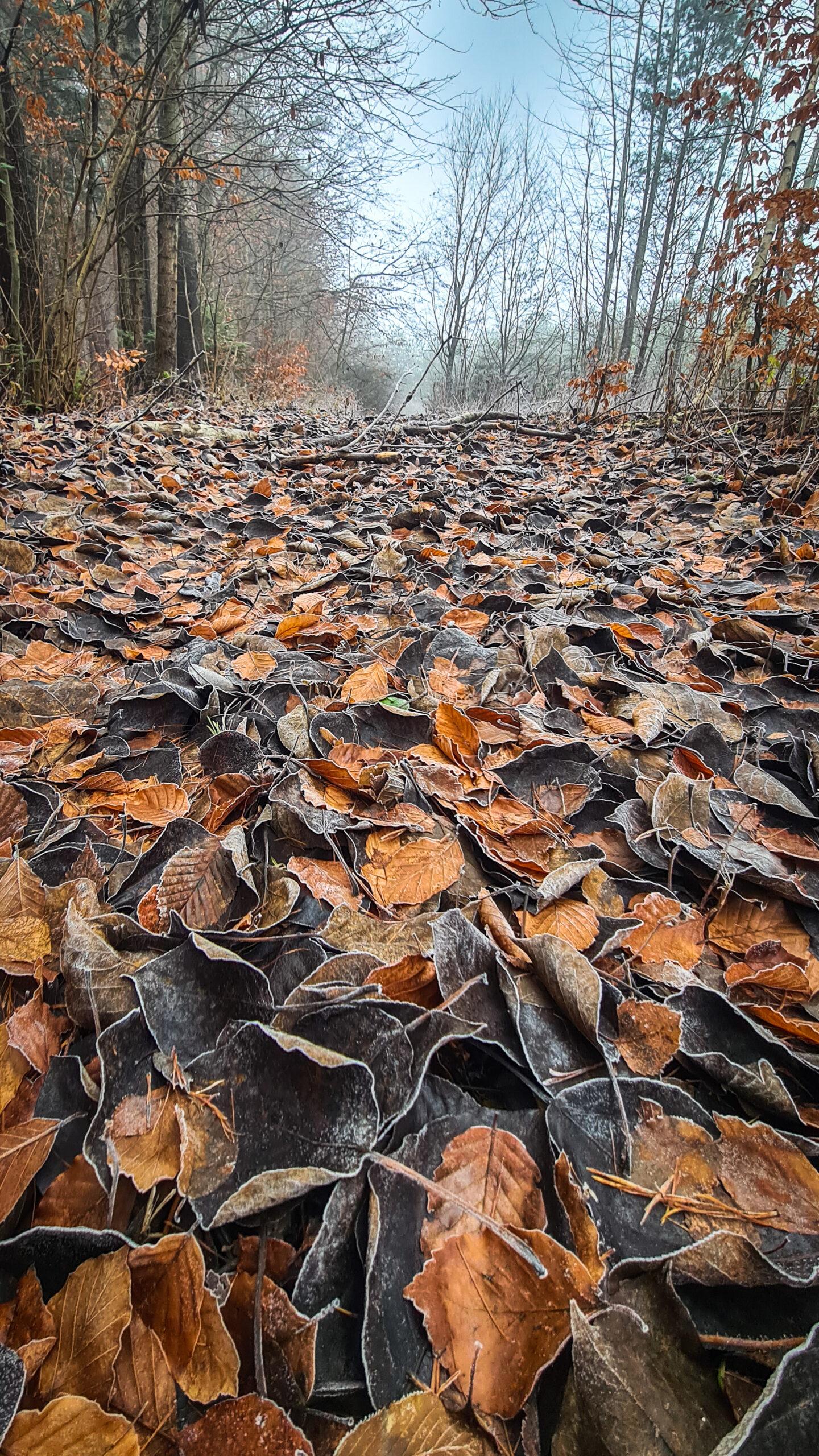 """I miejsce, kategoria wiekowa do 15 lat, podkategoria przyrodnicze zdjęcie krajobrazowe – Martyna Łyczak """"Jesień na Roztoczu"""""""