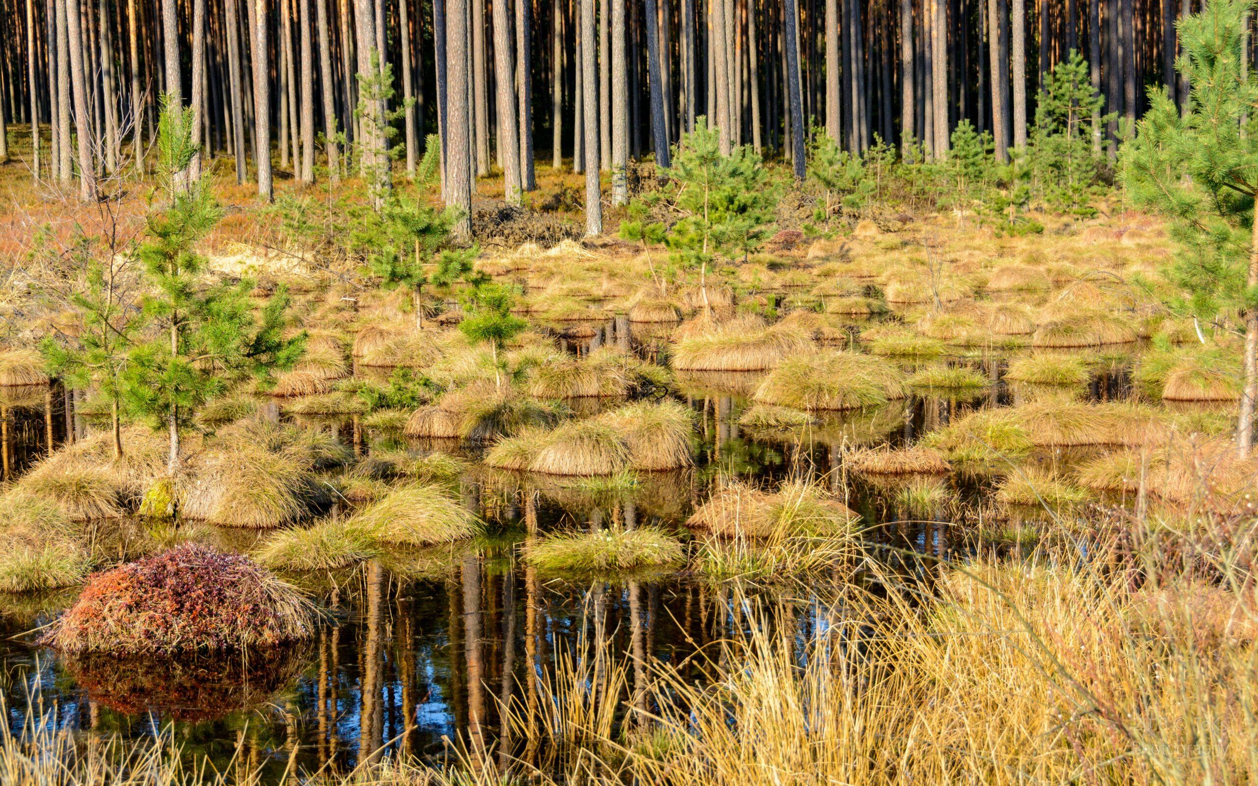 """II miejsce, kategoria wiekowa do 15 lat, podkategoria przyrodnicze zdjęcie krajobrazowe – Martyna Łyczak """"Mokradła"""""""